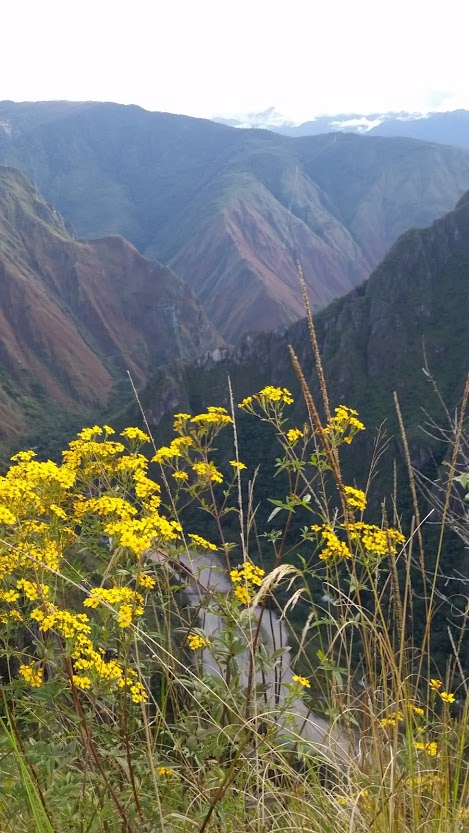 A scene with flowers and mountain, the clarity you can obtain in a psychic intuitive reading with Andrea-Marie Stark