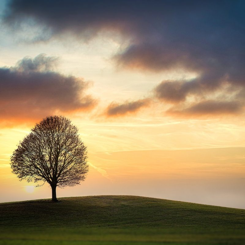 A solitary tree on top of a hill, might represent the simplicity and guidance you get in a tarot reading with online tarot reader Andrea-Marie Stark.